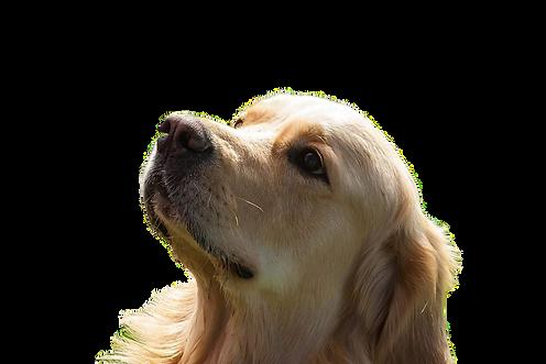 Bracknell dog walking
