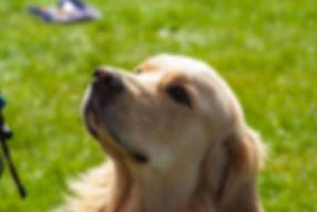 Dog trainer and walker Bracknell