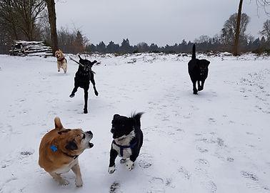 dog walker in Bracknell Ascot