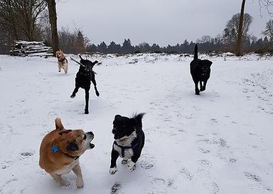 Dogs2go dog walker in Bracknell