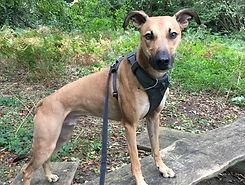 Dogs2go, Bracknell dog walkers