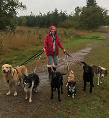 Dog walker Bracknell Ascot