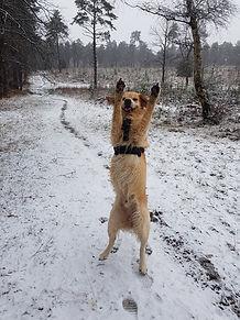 Group dog walking in Bracknell