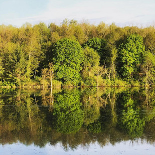 horizon showing reflective lake with bright green trees