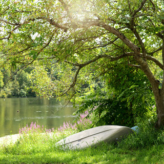 overturned canoe resting against a tree in summer with tall grass all around and a lake in the background