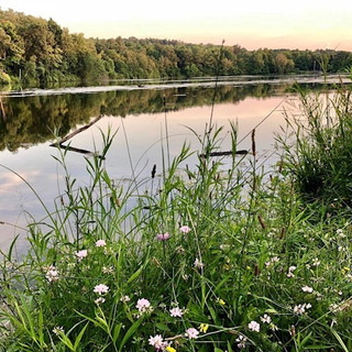 image of wildflowers with lake and trees in horizon background