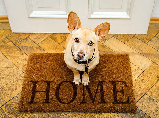 dog home.jpg