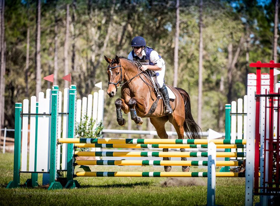 5 year old gelding o/o a Tizian mare ON