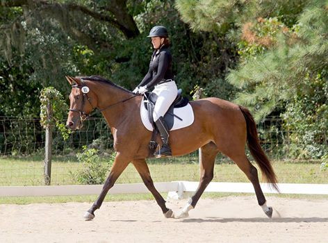 5 year old mare out of a TB mare