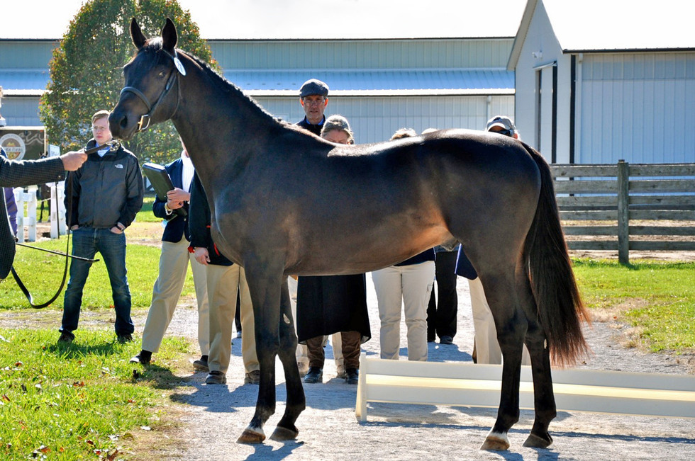 2 year old colt out of a Zauberklang *E* mare