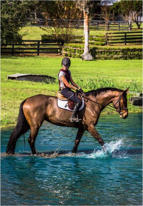 4 year old mare o/o a Radscha mare schooling