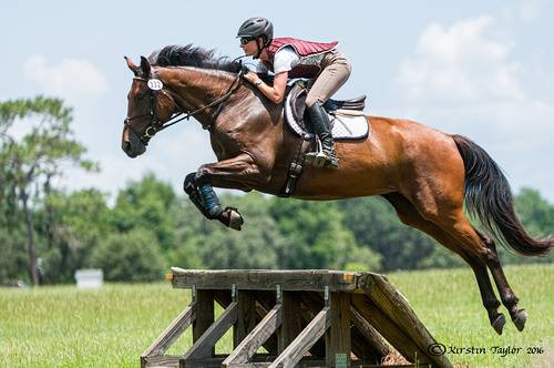 5 year old mare o/o a Radscha mare ON
