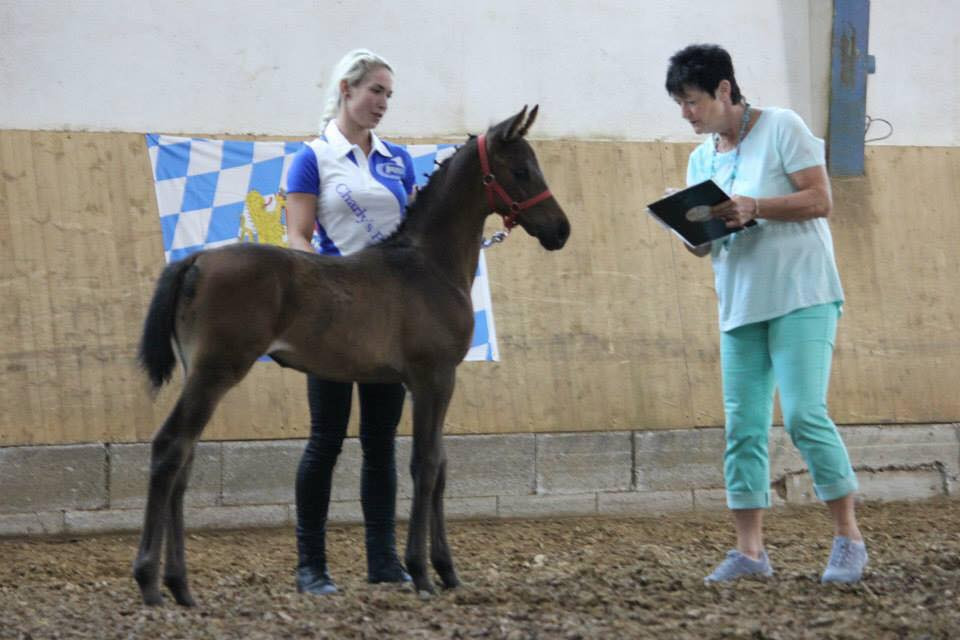 Perfect Surprise (out of a TK mare) Premium Foal in Germany