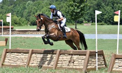 6 year old gelding o/o Tizian mare ON