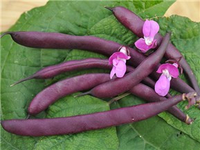 Plant some magic beans