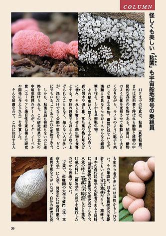 コラム「粘菌」