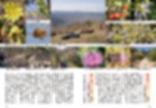 信州の里山トレッキング「五里ヶ峰2」