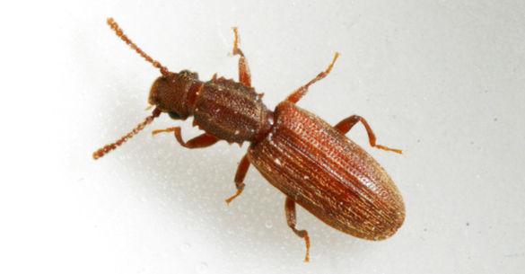Food & Fabric Pests