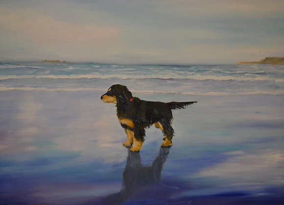 SOLD Young Cocker spaniel on a beach in Cornwall