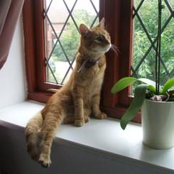 Rodney posing for Catler!!!.jpg