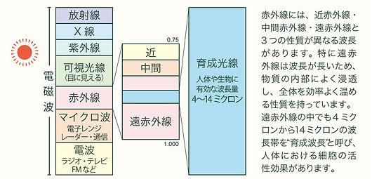 info_ラジカル.jpg