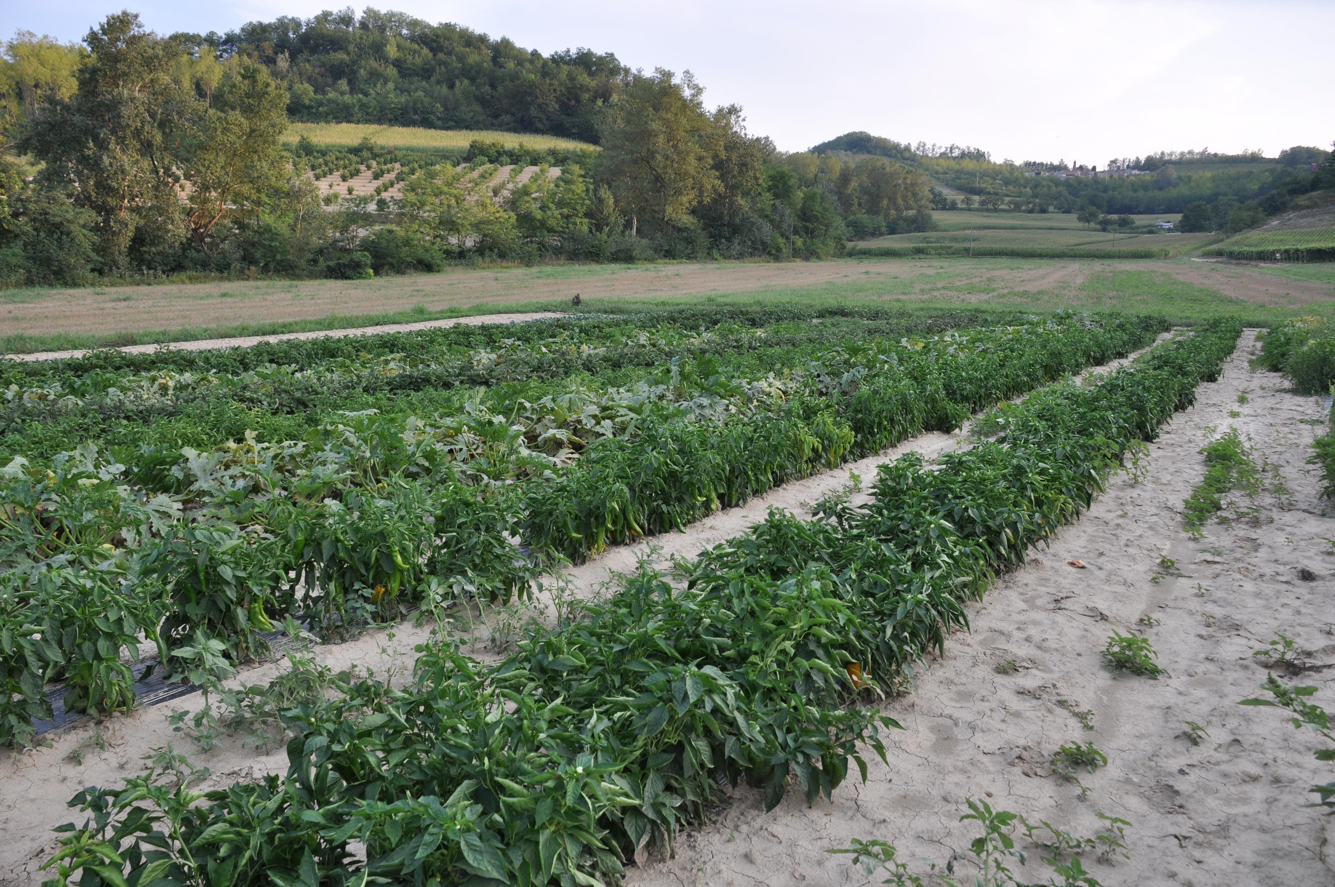 Cuore Verde - Morsasco - Piemonte