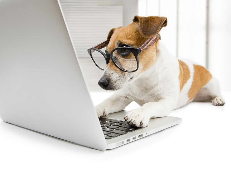 how-smart-is-your-dog-211047988-1280.jpg