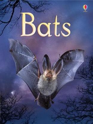 Bats (Beginners)