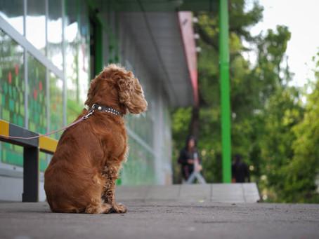 My Dog Waits For Me.