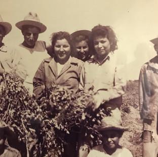 Dad (far right) on farm