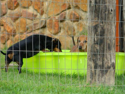 Gauteng Dog Kennels