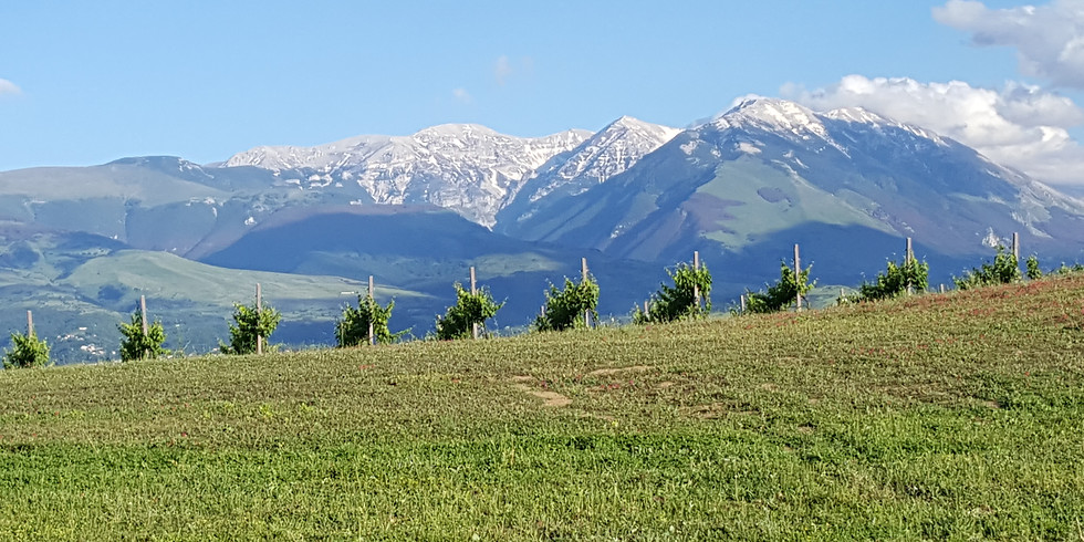 SOLD OUT Virtual Abruzzo Wine Dinner Event