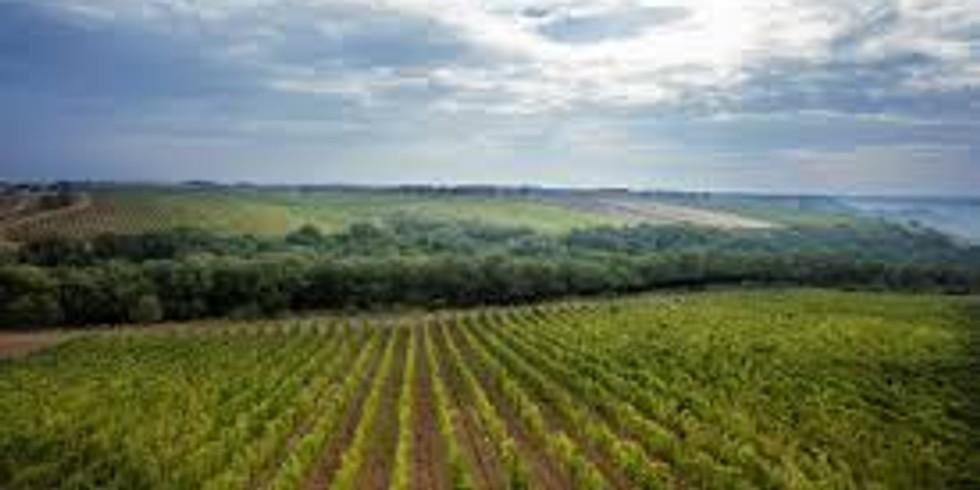 Simpatico Virtual Zoom Wine Dinner Series