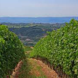 Veneto Zoom Wine Dinner Event with Guest Speaker Marcello Palazzi