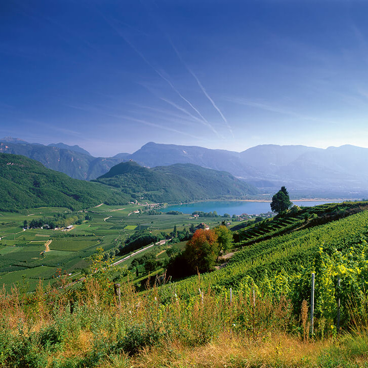 Alto Adige Zoom Wine Dinner Event with Guest Speakers from Italy!