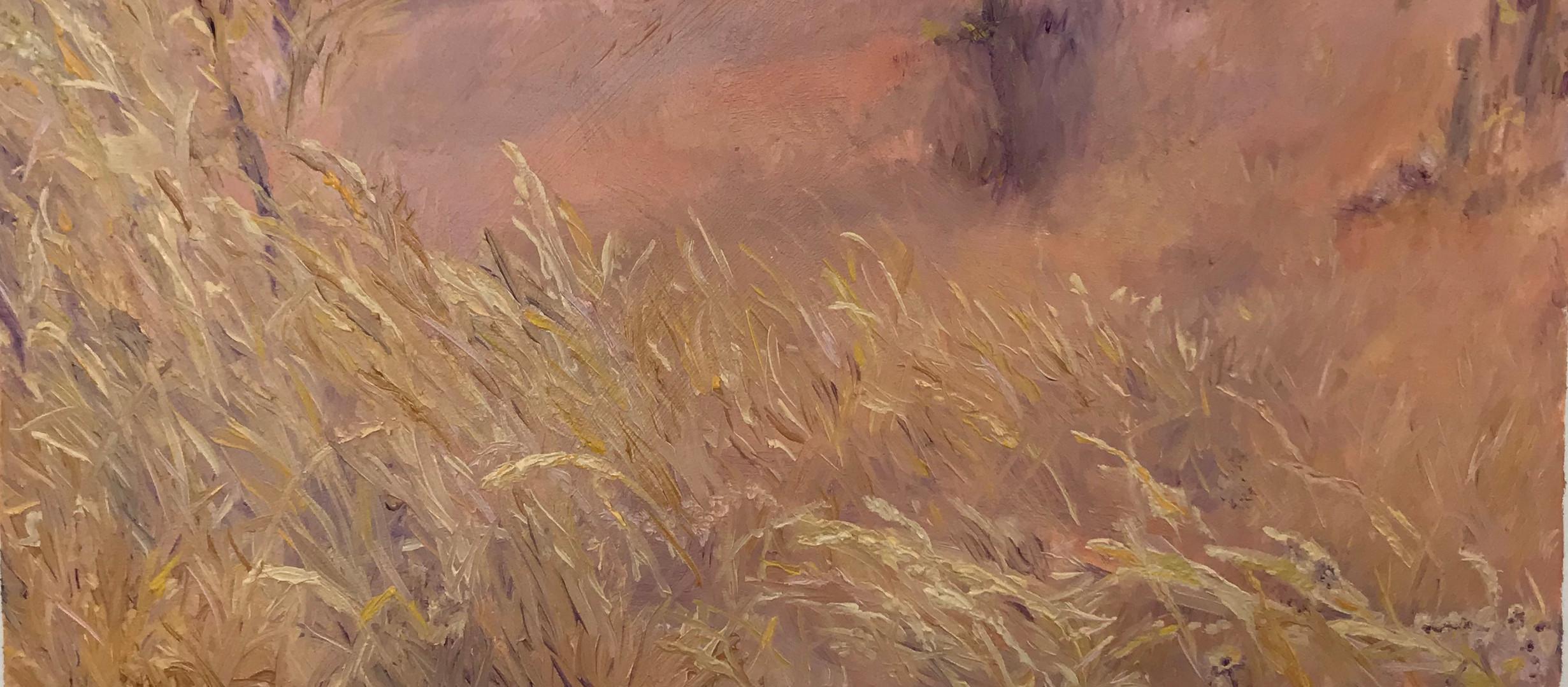 End of Summer Grasses