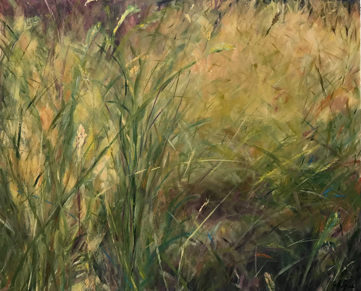 The Grasses Out Back