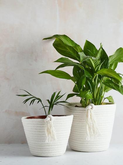 ecotwist-Plantpot-cotton-ecofriendly_edi