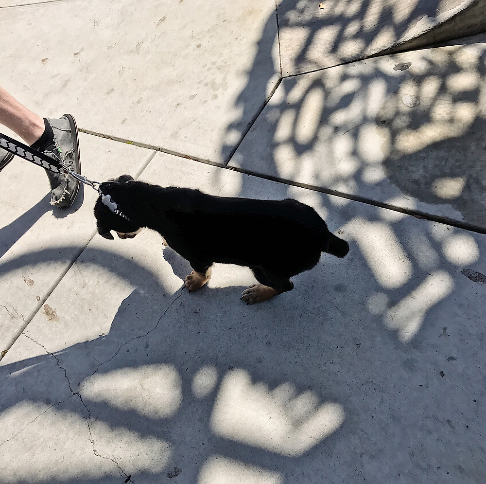 Puppy's First Walk