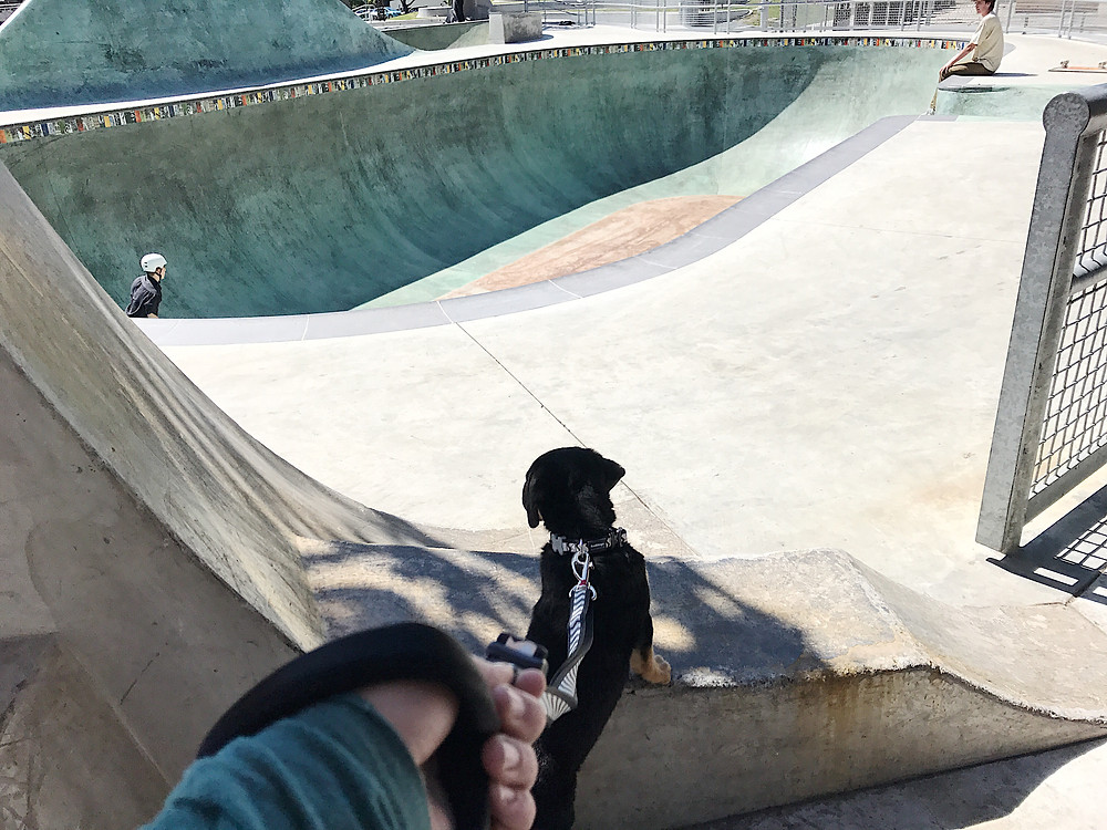 puppy at the skate park