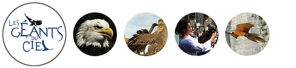The giants of the sky - Bird show, falconry ... at Chauvigny, 10 kms from the The valley of the monkeys - Zoological park, lemurs ... in Romagne, 45 kms of the campsite of Mouchet