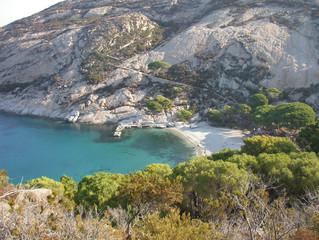 Continuano le belle notizie sulla nidificazione della berta minore nell'Isola di Montecristo.