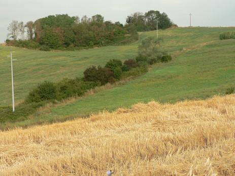 Coltivi e vegetazione di impluvio