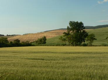 Valle del t. Sterza: colline plioceniche