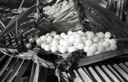 Turtle 3 eggs - Bikar - 12-1975