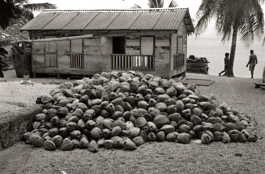 Coconuts for Copra
