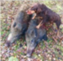 hund o 2 grisar_edited.jpg