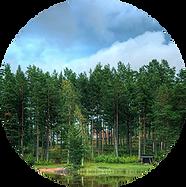 环境(背景2).png