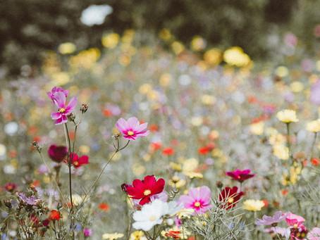 Le trop long voyage des fleurs