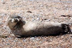 Seals (4).jpg